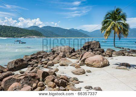 Perfect One Palm Tree Beach, Ilha Grande Island. Tropical Paradise Rio Do Janeiro. Brazil.