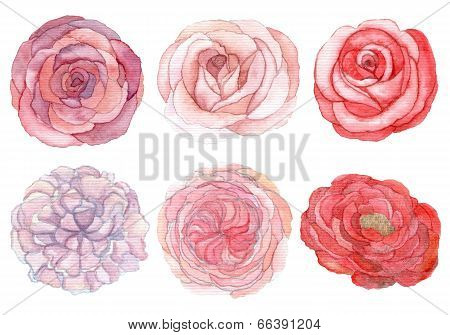 Set Of Roses And Peonies