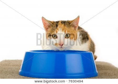 spotted cat and a food dish, isolated poster