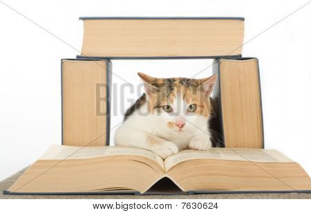 spotted white cat and books, isolated on white