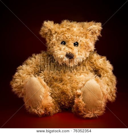 Portrait Of A Fluffy Teddy Bear