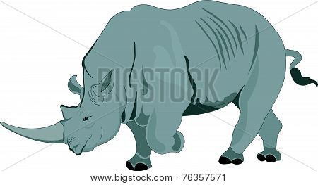 Rhinoceros Or Rhinocerotidae, Illustration