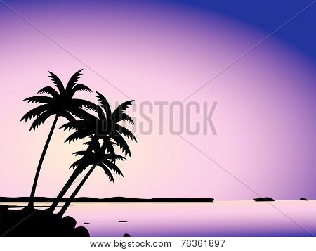 Tropical Palm Trees And Sea