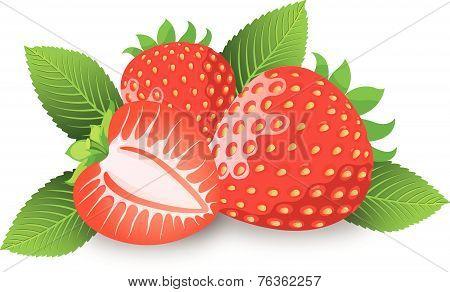 Strawberry, Illustration