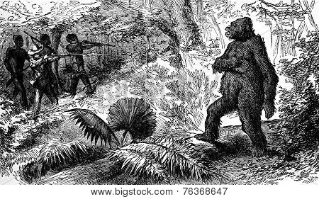 Country snakes. The death of gorilla vintage engraved illustration. Journal des Voyage Travel Journal (1880-81). poster