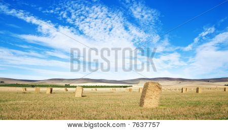 Wheat Field In The Country