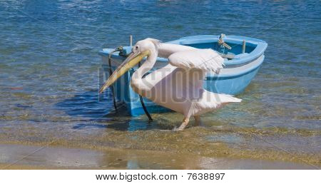 Pelican go on the sandy shore near the fishing boats poster