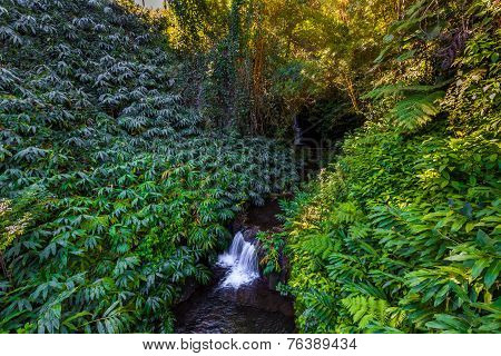 Small Waterfall With Greenery