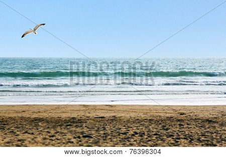 Beautiful ocean shore with waves and a seagull above poster