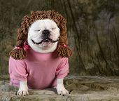 funny dog wearing wig female clothes on green background poster