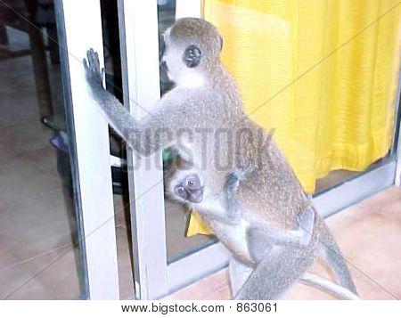 Monkeys  business