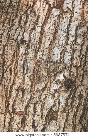 Tree And Wood Skin Background Close Up
