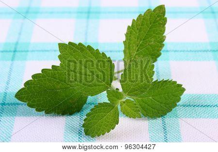 Fresh Healthy Lemon Balm On Checkered Tablecloth, Herbalism