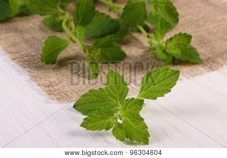 Fresh Healthy Lemon Balm On White Wooden Table, Herbalism