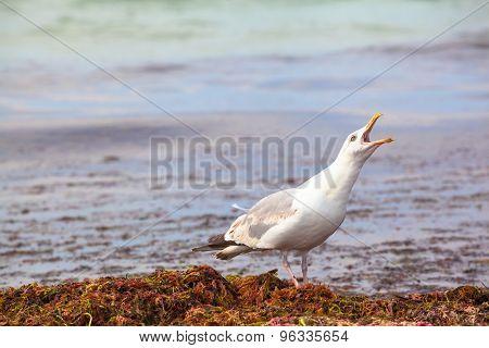 Seagull Cry