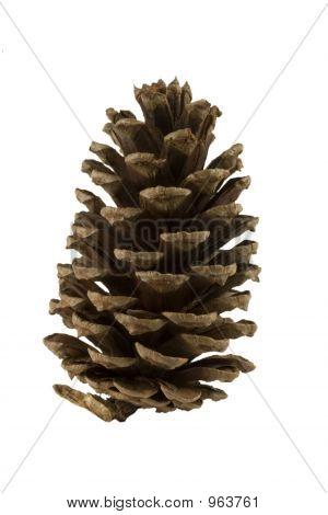 Pine Cone Alpha