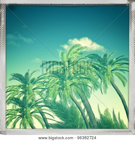 Retro view. Summer trip backgrounds with palm tree for your design