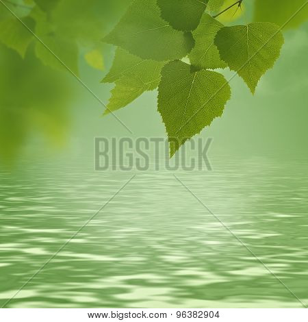 abstract natural backgrounds with green foliage and beauty bokeh