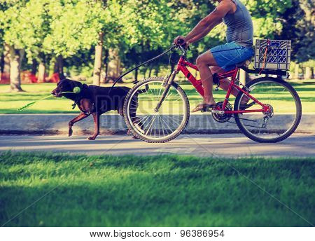 a man riding his bicycle  behind a running dog with a ball thrower in his mouth on a bike path in a city toned with a retro vintage instagram filter effect app or action