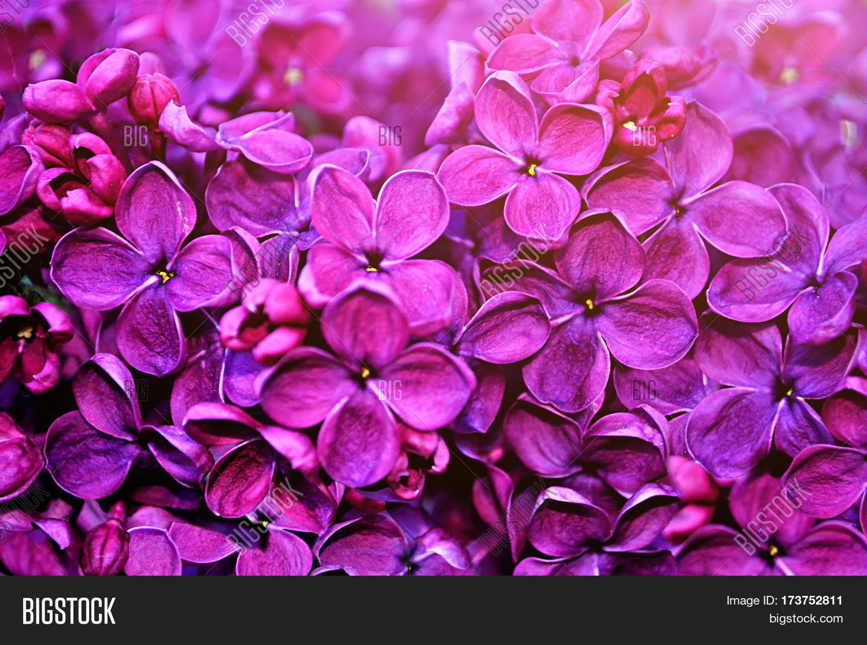 Bild Und Foto Zu Spring Kostenlose Probeversion Bigstock