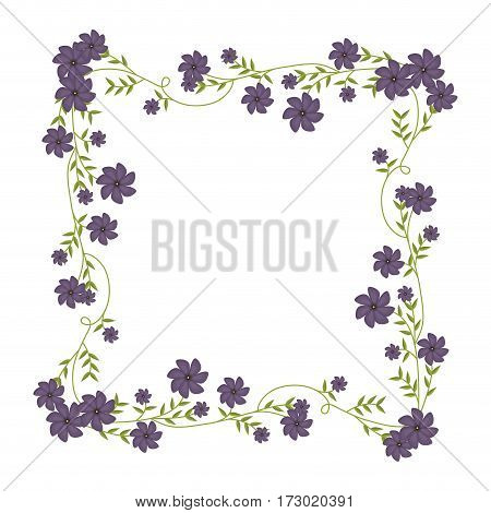 square frame ornament with creepers and violet flowers vector illustration