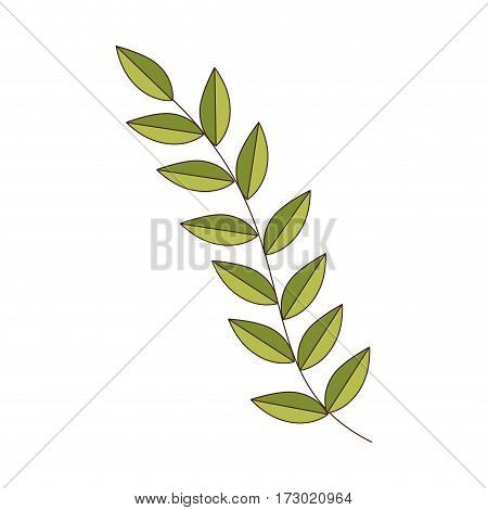 green Silhouette oval leaves with ramifications vector illustration