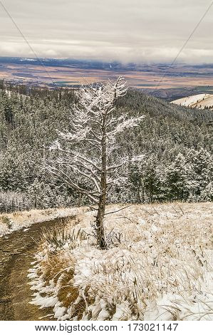 Lone deciduous tree stands at the edge of a dirt road overlooking mountains and valleys on a snowy day
