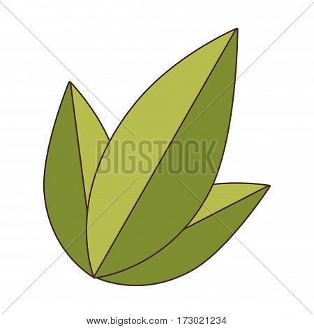 set collection green leaves nature plant icon vector illustration
