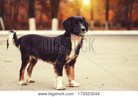 Stray dog in the park waiting for his master. The concept of protection of homeless animals. Abandoned puppy.