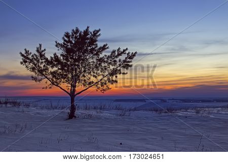 Lonely tree at sunset. Dreamlike winter landscape.
