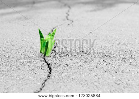 Small tree breaks through the pavement. Green sprout of a plant makes the way through a crack asphalt. Concept: don't give up no matter what nothing is impossible.