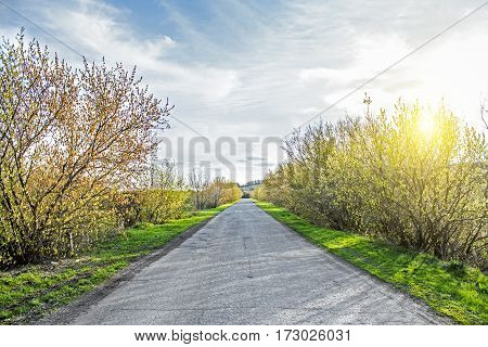 Empty road in forest at sunny summer day