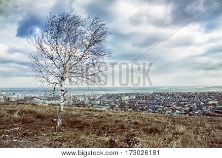 Lonely tree on the mountain overlooking the city
