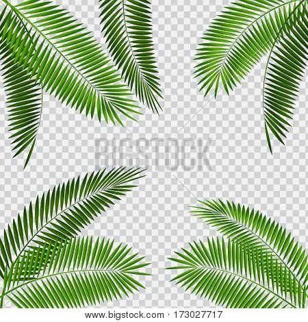 Palm Leaf Vector Illustration on Transparent Background EPS10