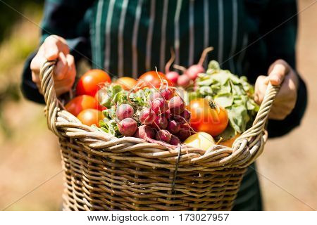 Mid section of female farmer holding a basket of vegetables in the vineyard