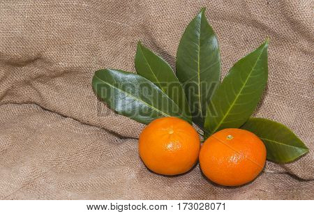 Bright orange tangerines with green leaves. Still life fruits: ripe tangerines