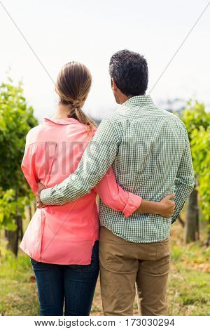 Couple standing with arm around and looking at nature in vineyard