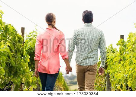 Couple walking through vineyard on a sunny day