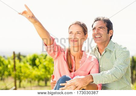 Couple standing in vineyard and pointing at nature on a sunny day