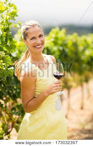 Portrait of female vintner holding wine glass in vineyard