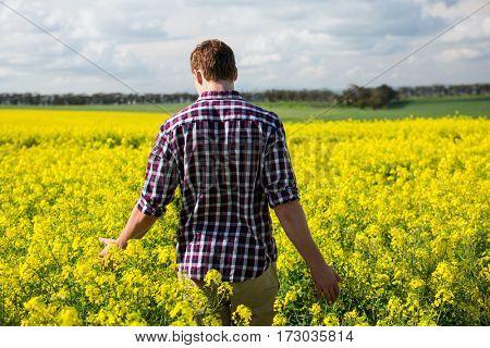 Rear view of man walking in mustard field on a sunny day