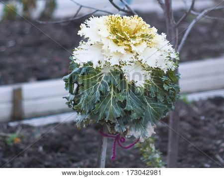 An interesting plant growing in the garden