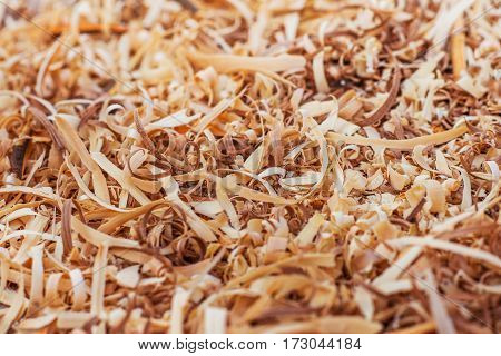a colorful different wood large shavings background