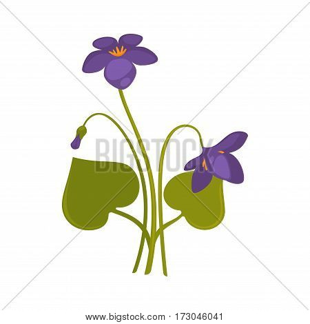 Violets bunch isolated on white close up vector picture. Colorful bouquet of forest purple soft flowers with thin green stems and big leaves. One straight and two bent violet flowers on white