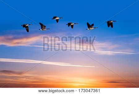 Birds at sunrise spring or autumn concept
