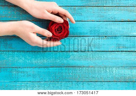 top view of female hands holding rose flower