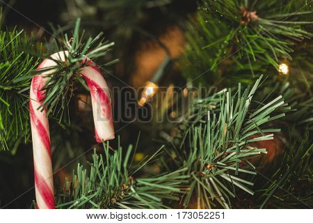 Close-up of candy cane hanging on christmas tree during christmas time