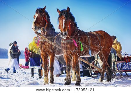 Horses with sledges at the bank of frozen river in wintertime. Frosty weather