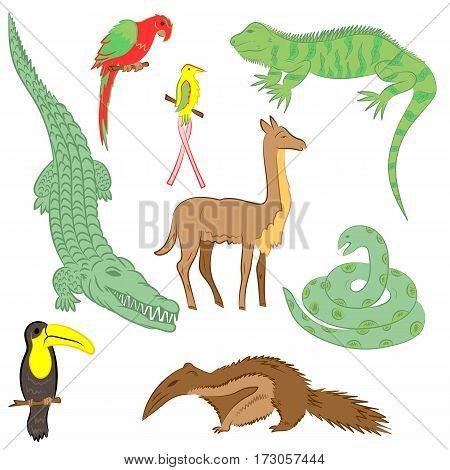 Colorful Hand Drawn Animals of South America. Doodle Drawings of Iguana Crocodile Parrot Ara Toucan HummingbirdAnaconda Anteater and llama. Flat Style. Vector Illustration.