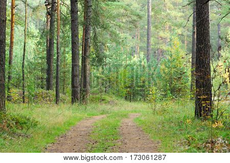 trees and stumps in the beautiful autumn forest